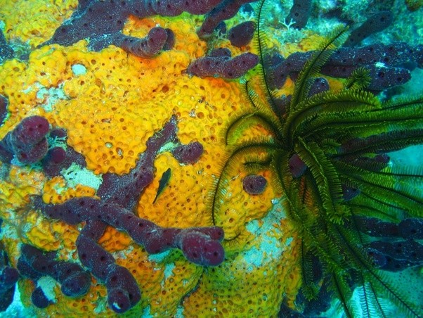 What are the most beautiful coral reefs in the world? - Quora  What are the mo...