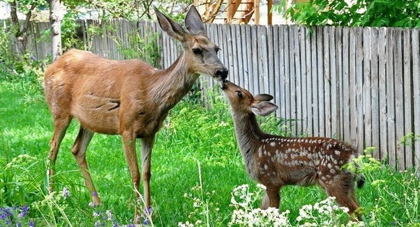 What is a group of deer called? - Quora
