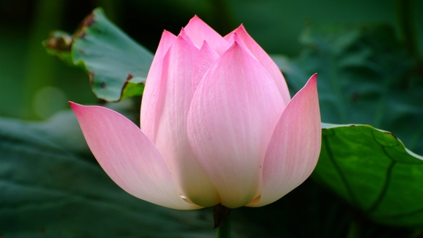 What do different flowers symbolize to different cultures quora one needs 108 lotus flowers for durga puja several hindu gods and goddesses are seen on pictures to be seated on a huge lotus flower and appear quite mightylinksfo