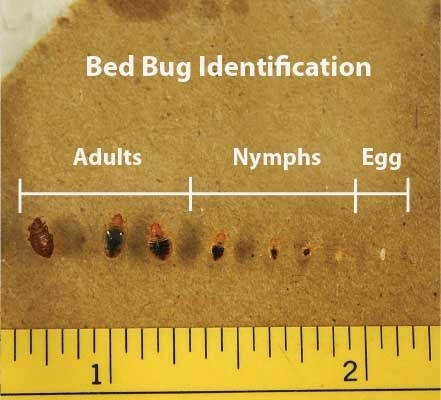 How Long Does It Take To Kill Bed Bugs In The Dryer Quora