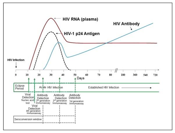 Is Hiv p24 antigen conclusive at 105 days? - Quora