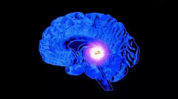Why is it that only the pineal gland calcifies? - Quora