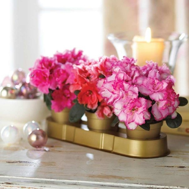 What are the best plants to have indoors to decorate with? How do ...