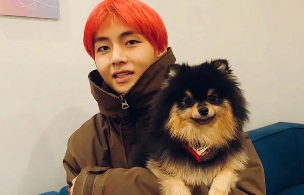 What Is Kim Taehyung S Dog S Name Quora
