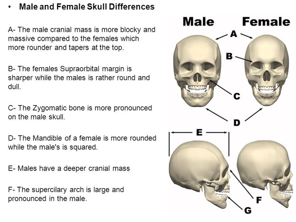similarities and differences of male and female With all these similarities you could come to the conclusion that men and women   in addition, females and males exhibit different patterns of.