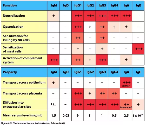 Function Of Antibodies Immunoglobulins: What Are The Types For Antibodies And What Are Their