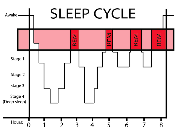 sleep and lots of stage 3 sleep deep sleep but in the third cycle you should experience about 30 minutes of rem and in the fourth cycle about 1 hour