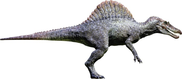 Could Rexy kill the spinosaurus from Jurassic park 3? - Quora