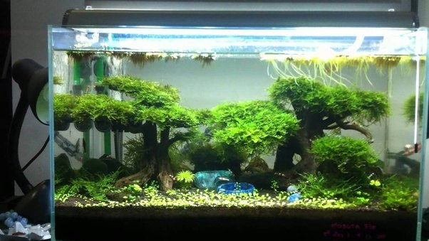 What pets can thrive in a 10 gallon tank quora for Well water for fish tank