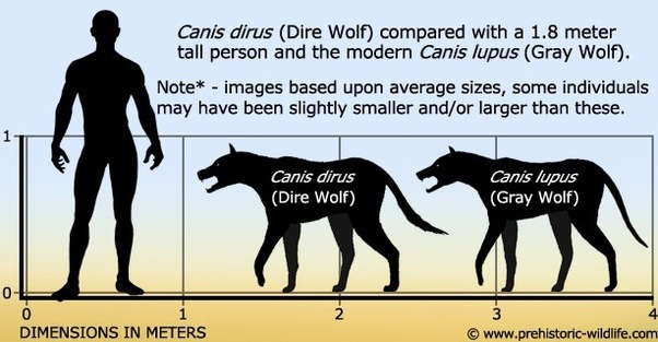 What S The Difference Between A Wolf A Dire Wolf And A