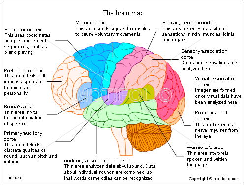 How much potential does the human brain possess can we max our above is a map of the brain as you can see there are very important functions that your whole brain is doing right now from not falling over to ccuart Gallery