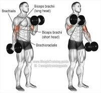 With The Correct Form And Technique Your Biceps Will Feel Burn Youll Avoid Potential Injury Along Way