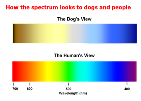 What Colors Can Dogs See Quora