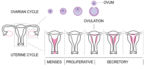 how to feel after ovulation