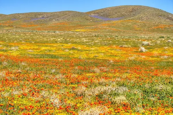 What is a field of flowers quora source desert bloom in palm springs mightylinksfo