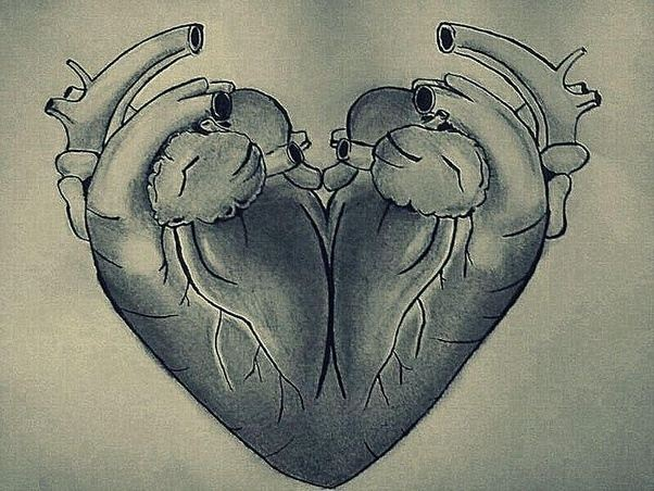 Why Doesnt The Heart Symbol Look Like The Actual Heart At All Quora