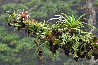 What Are Some Of The Adaptations Of The Plants Of The