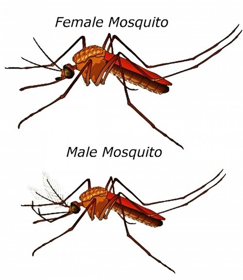 It S A Sound That Can Keep Even The Weariest Among Us From Falling Asleep High Pitched Whine Of Mosquito This Irritating Buzz Already Makes Run
