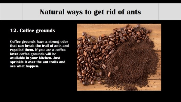 What Are Some Ways To Get Rid Of Ants