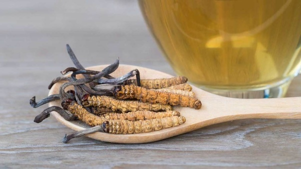 Who are the buyers of cordyceps in India? - Quora