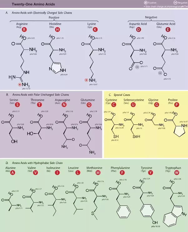 What is the r group of amino acids how important are they in in enzymes the pocket where the substrates are reacted need to have certain radicals expressed in order to bind and weak the bonds of the substrates thecheapjerseys Gallery
