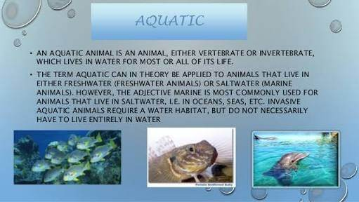 facts and information about marine mammals and their adaptation features This occurs because individuals with these traits are better adapted to the   dolphins are adapted to living in water  following are a few of the ways that  marine organisms have adapted their physical features to suit a.