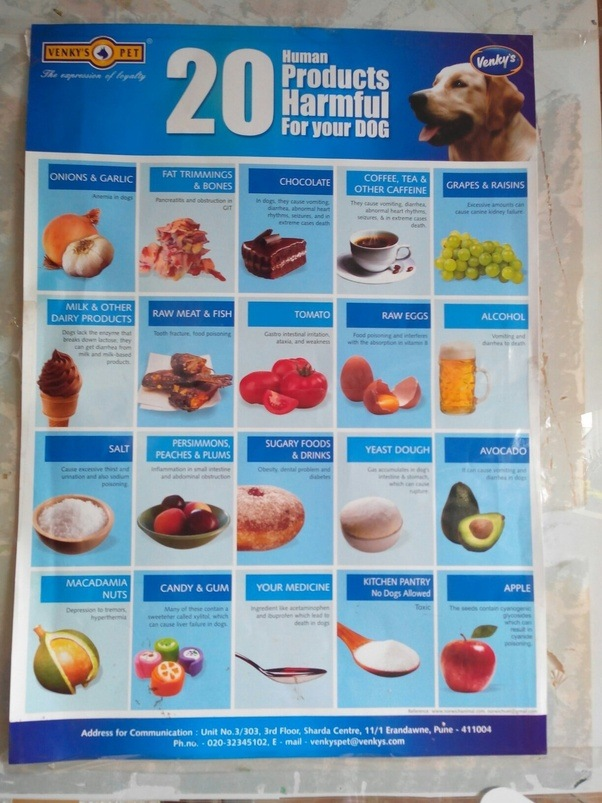 What Is The Best Food To Feed My Diabetic Dog