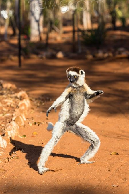 Where Can I Buy German Food In England: Where Can You See Lemurs In Madagascar?