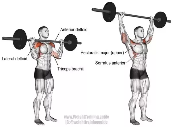 Can I build a big chest just by doing overhead press? - Quora