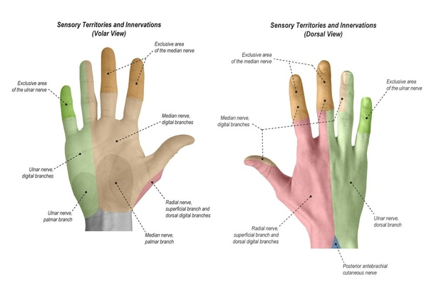 POSTERIOR INTEROSSEOUS NERVE PALSY  Hand Surgery Source