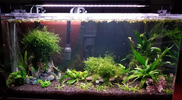 I M About To Dip My Toes Into The Aquascaping World What Tips Would You Share With A Complete Newbie Quora