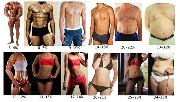 Diets To Lose Weight Fast Meal Plans
