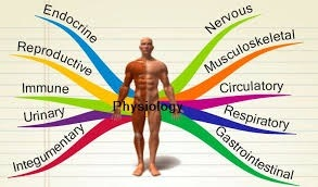 What is the difference between anatomy and physiology? - Quora