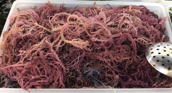 What are the vitamins and minerals in Irish moss? - Quora