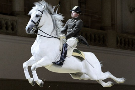 What does a white horse symbolize in a vision? - Quora