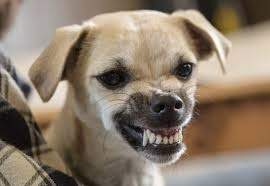 Dog Showing Teeth Submission