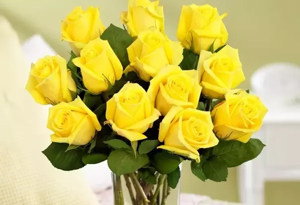 What flowers symbolize friendship quora why the yellow rose theyre so bright and they mean friendship and happiness mightylinksfo