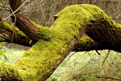 Examples of bryophyte plants.