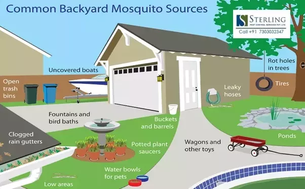 Get Rid Of Mosquitoes 05312016