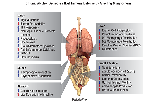 Does Drinking Alcohol Cause Inflammation