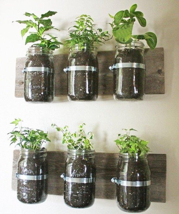 how to create a indoor wall garden - quora