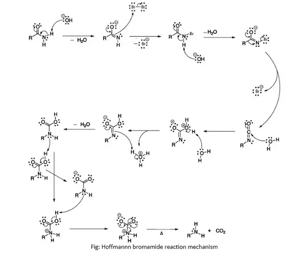 What Is The Intermidiate In Hoffman Bromamide Degradation