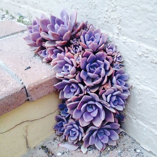 """Image result for images of a plant breaking through concrete"""""""