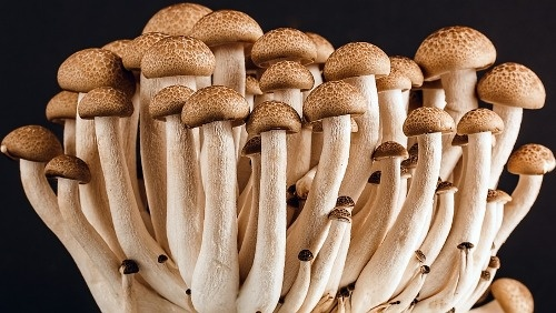 What is scope of Mushroom cultivation in India? - Quora