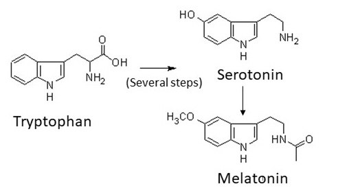 Which sleep supplement is better, Tryptophan or Melatonin