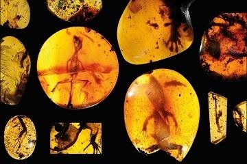 T-rex soft tissue carbon dating