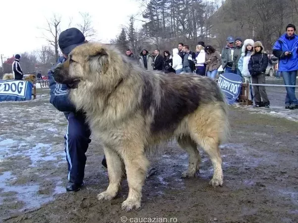 Russian Dog Names For Females