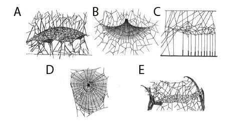 What Kind Of Pattern Would Describe The Web Of A Black Widow Since It Doesn T Appear To Be An Orb Shaped Or A Plain Spider Web Quora
