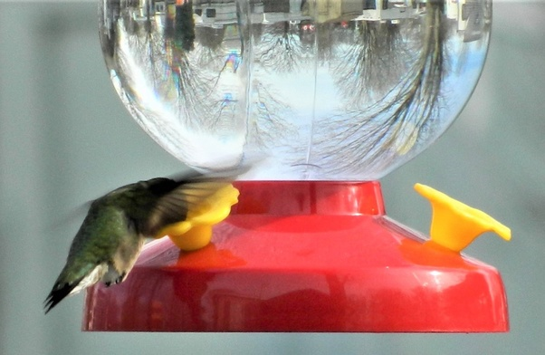 What Is The Best Way To Attract Hummingbirds Quora
