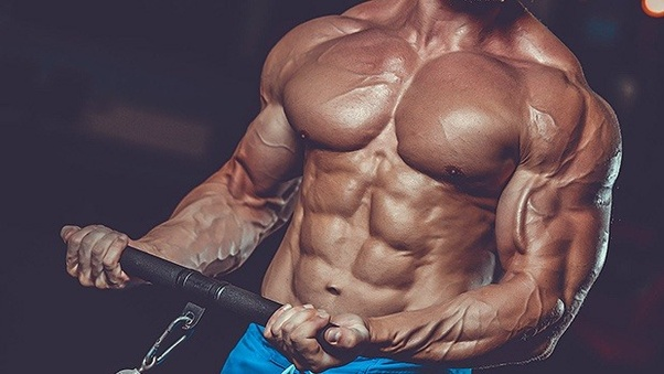 How to build muscle in 6 months - Quora